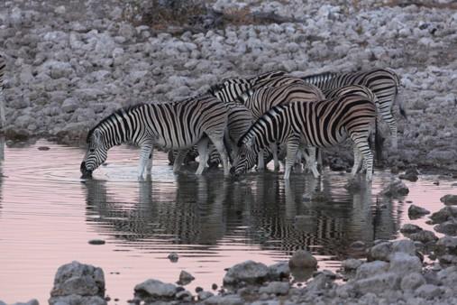 Senior Travel - Adventure Tour - African Safari