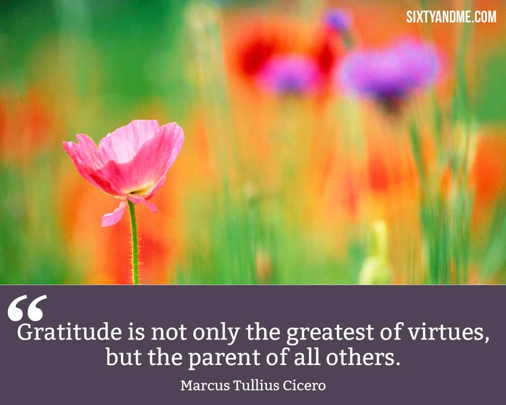 """""""Gratitude is not only the greatest of virtues, but the parent of all others."""" - Marcus Tullius Cicero"""