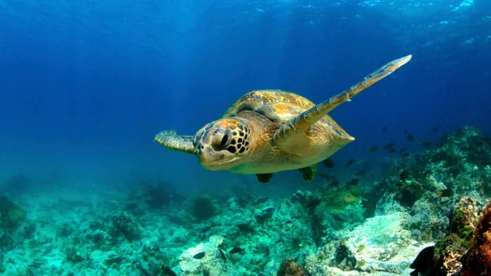 6 Travel Destinations for Truly Adventurous Baby Boomers - Galapagos Islands