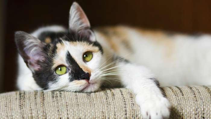 Benefits of having a pet - 4