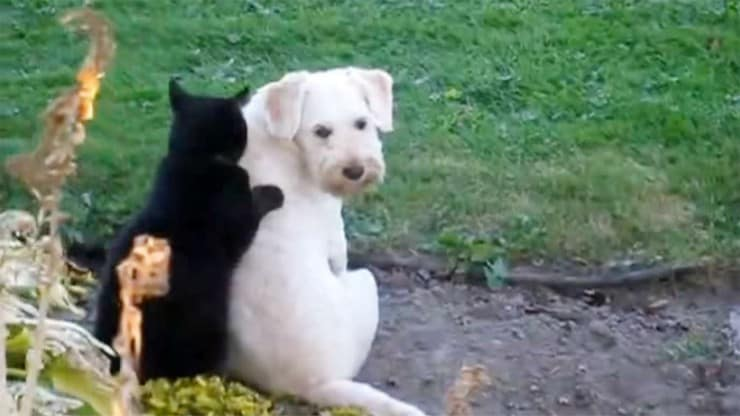 Sixty and Me - Cat Giving Dog Massage Takes Cuteness to a New Level