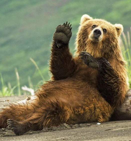 Sixty and Me - This Adorably Polite Bear Will Make Your Day