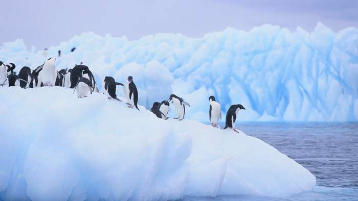 Once in a Lifetime Trips - Antarctica