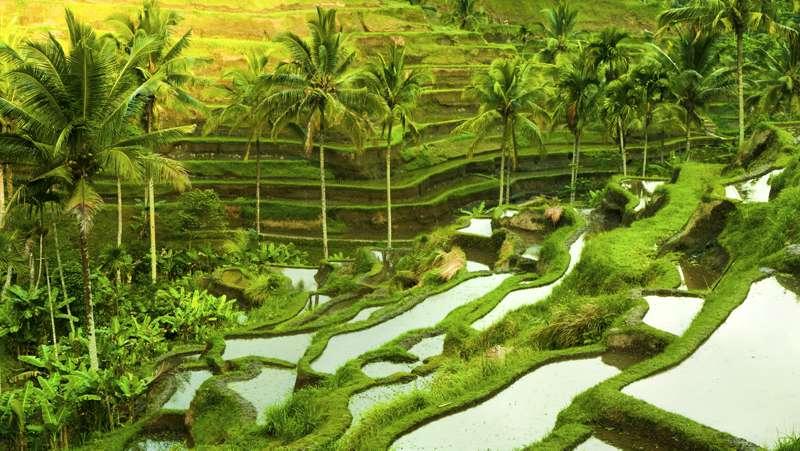Bali retirement - 2