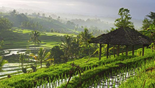 What I Learned About Finding Balance in Life in the Jungles of Bali