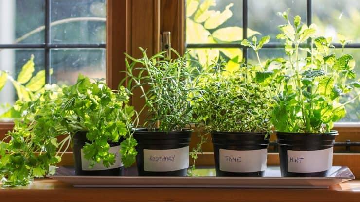 Grow-Fresh-Herbs-on-Windowsill