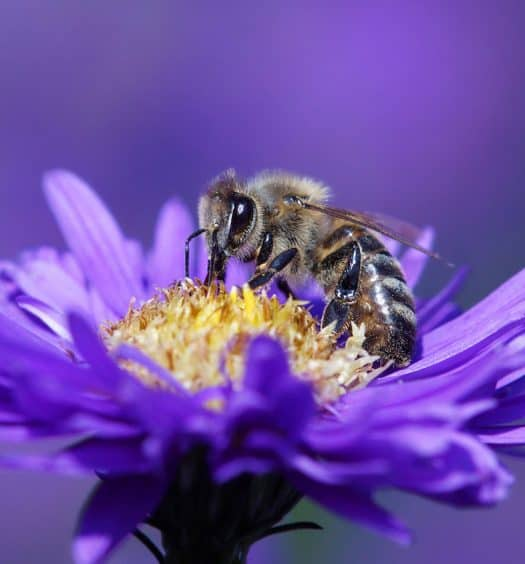 Container-Gardening-and-Pollinators