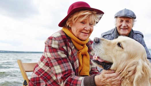 Dogs for Seniors: 5 Questions to Ask Before You Get a New Best Friend