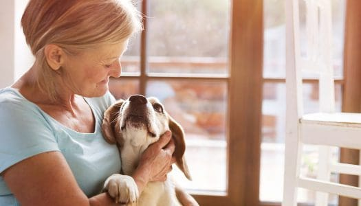 What is a Pet Trust and How Can it Protect Your Furry Friend?
