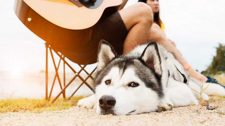 Sweet-Video-of-a-Man-Playing-Guitar-for-His-Dog