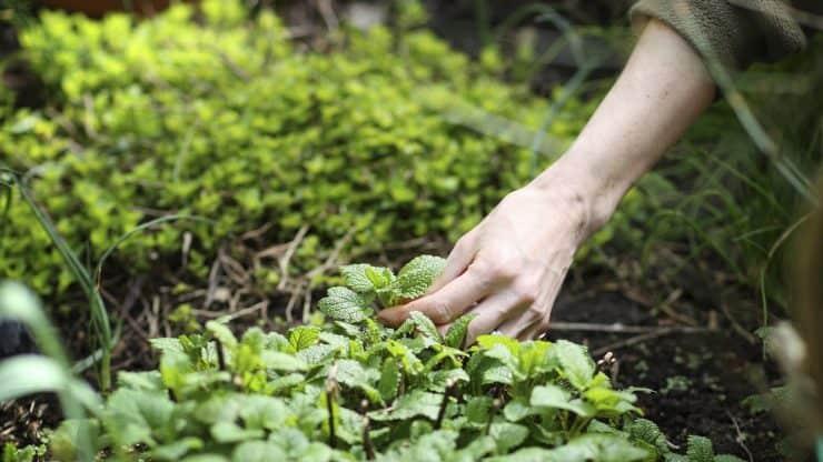 Prepare Your Garden for the Winter Season