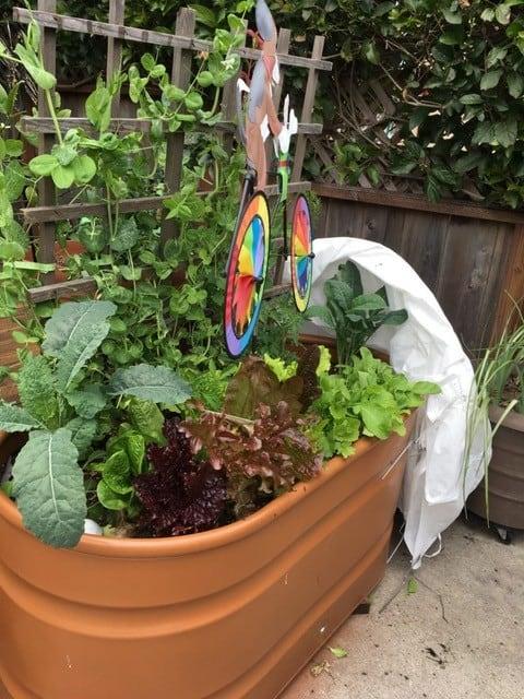 container gardening green veggies