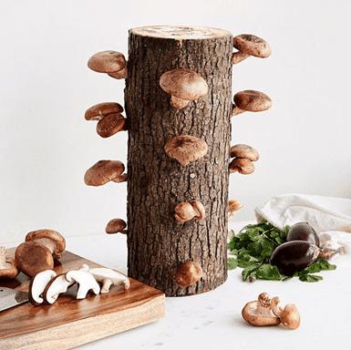 Mushroom Log Growing Kit