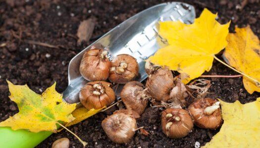 Preparing Your Backyard for Spring Planting