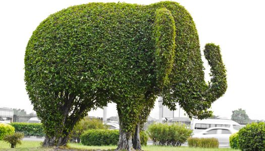 French Gardening: Your Topiary Masterpiece Awaits